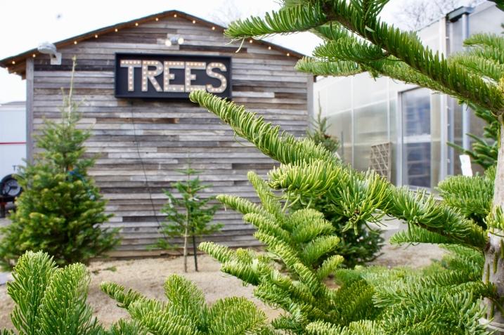 Christmas Trees :: Terrain :: Glen Mills :: PA