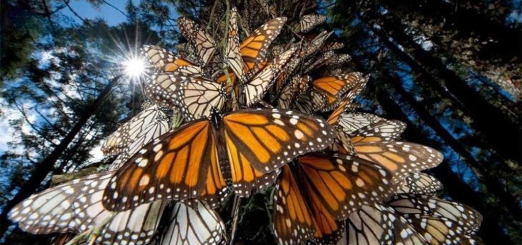 Butterfly Exhibition :: Houston Museum of Natural Science :: Houston :: TX :: Photo courtesy of Roadtrippers